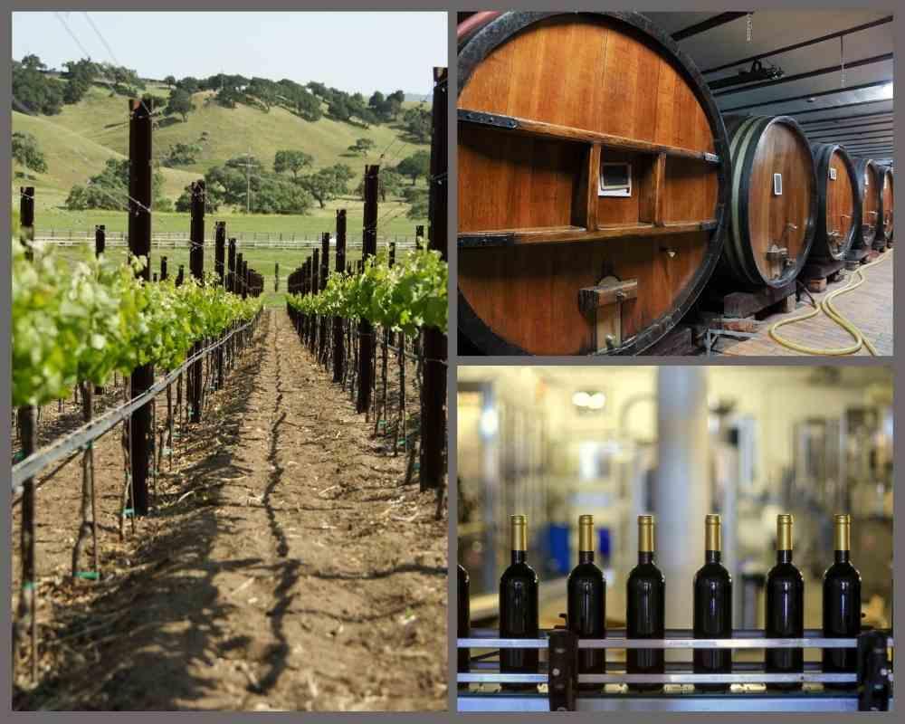 Wein Herstellung